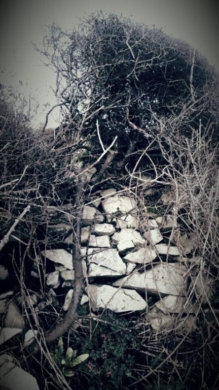 Limestone wall and thorns