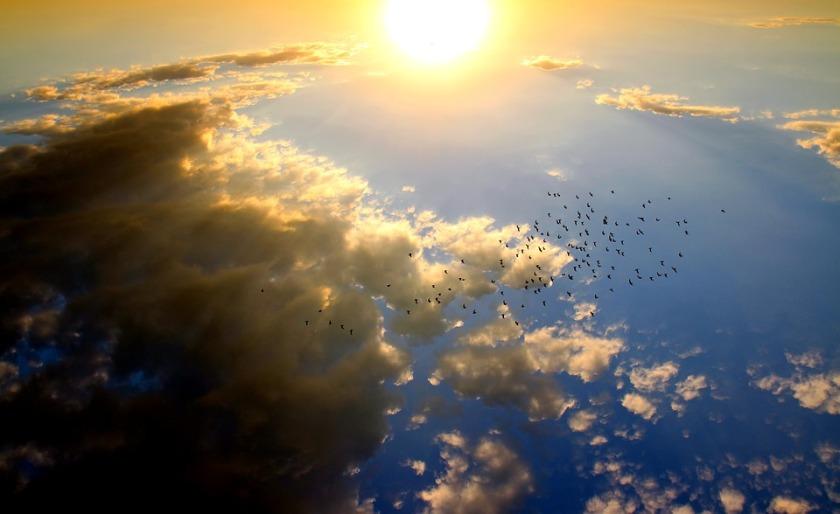 Sun Sunset Sky Red Cloud Birds